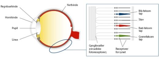 hcl_human-eye-retina_dk - Kilde Glamoxdotcom
